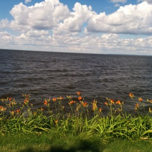 Tiger lilies on the edge of Lake Winnebago